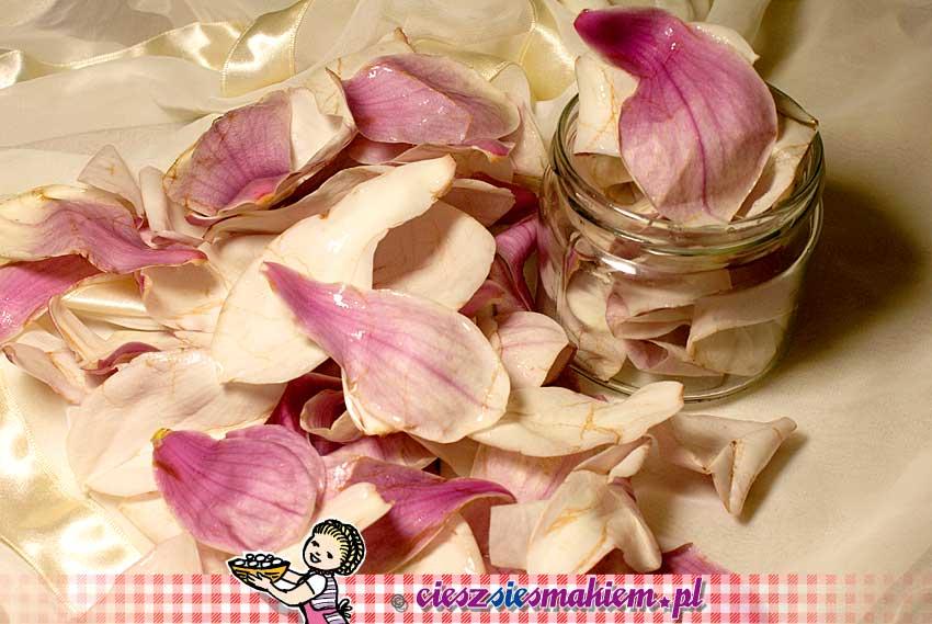 Magnolia_DSC0270